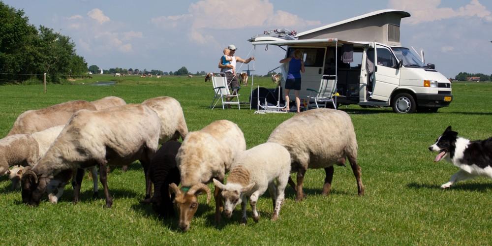 http://www.campingspijkerboor.nl/content/uploads/Zosha-Schapen_01_HR.jpg